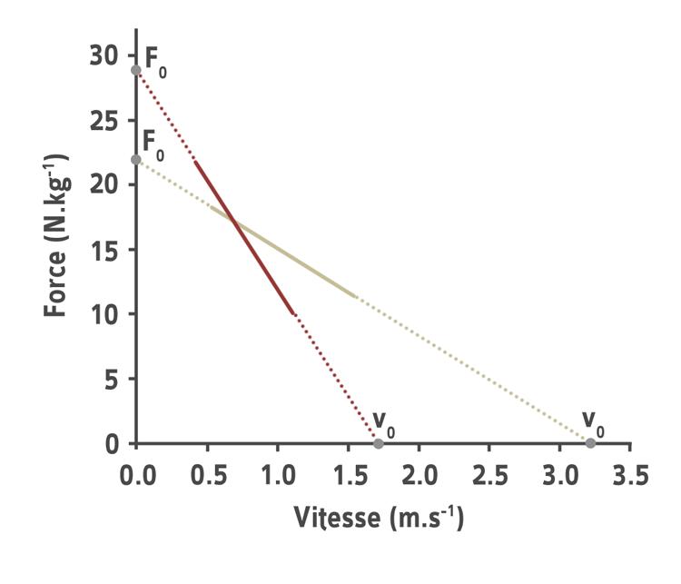 Graphique force vitesse